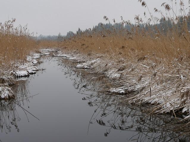 Kanal im Elbsee-Moor im Winter