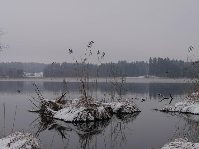Winter am Elbsee - schneebedeckte Binseninsel