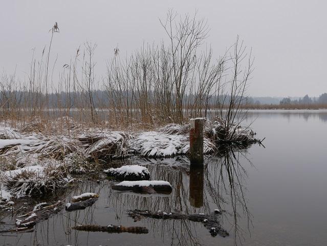 Winter am Elbsee
