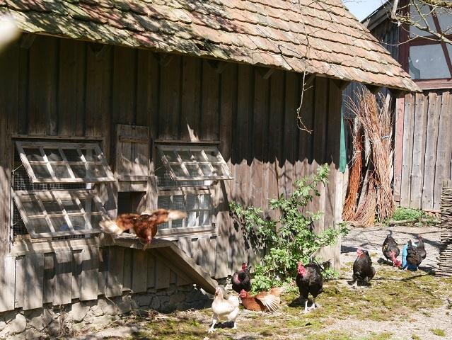 Hühnerstall im Bauernhausmuseum Wolfegg