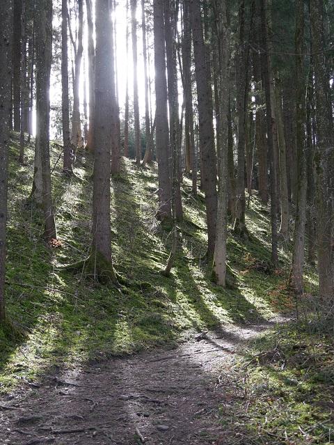 Waldweg im Licht der Frühlingssonne