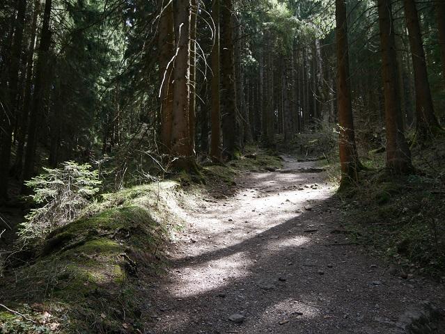 Waldweg zu Maria Trost an der Alpspitz