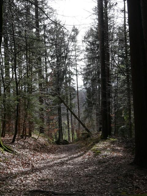 Waldweg zum Illersteg bei Altusried