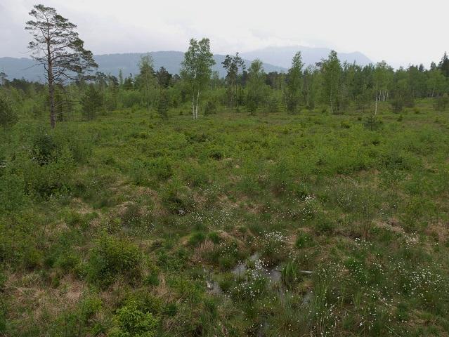 Sumpflandschaft im Werdensteiner Moos