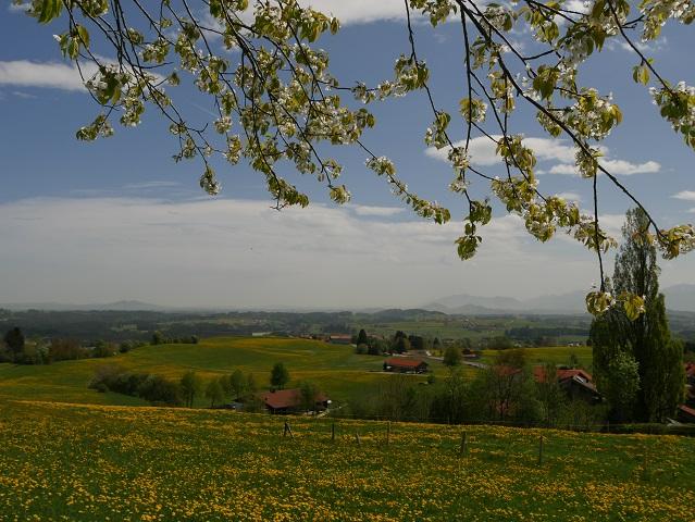 Frühling in Oy-Mittelberg