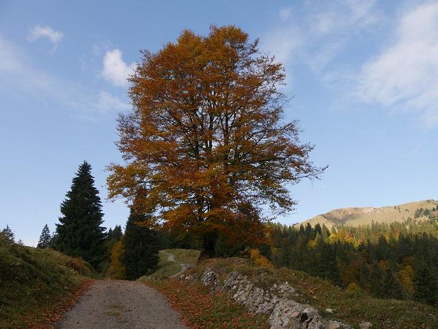 Weg auf den Leiterberg im Gunzesrieder Tal