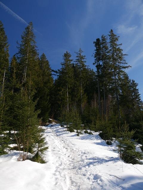 auf dem Römerweg zum Auerberg im Winter