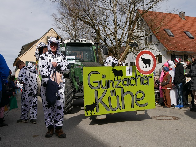 Faschingsumzug Obergünzburg 2019 - Günzacher Kühe