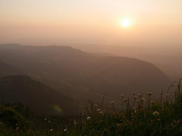 Bergblumen auf dem Hochgrat im Licht der untergehenden Sonne