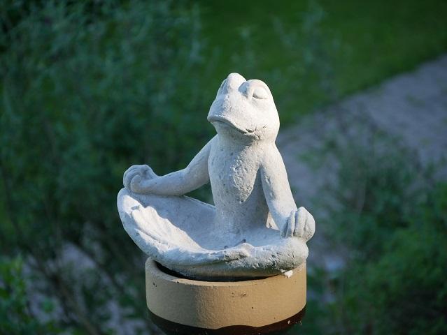 meditierender Frosch