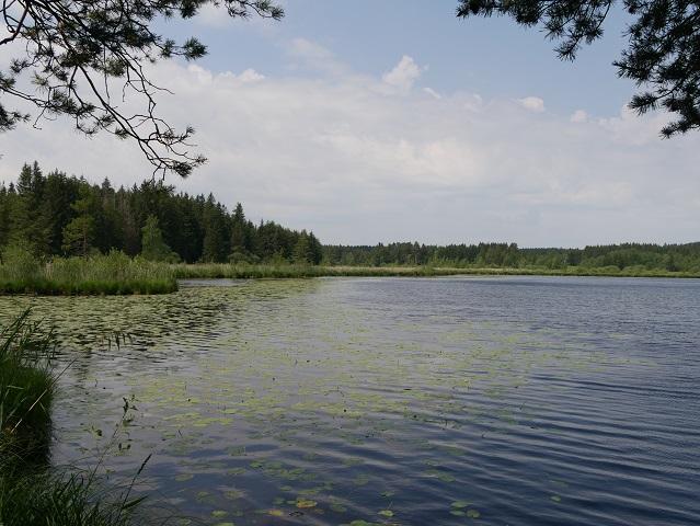 Elbsee im Sommer