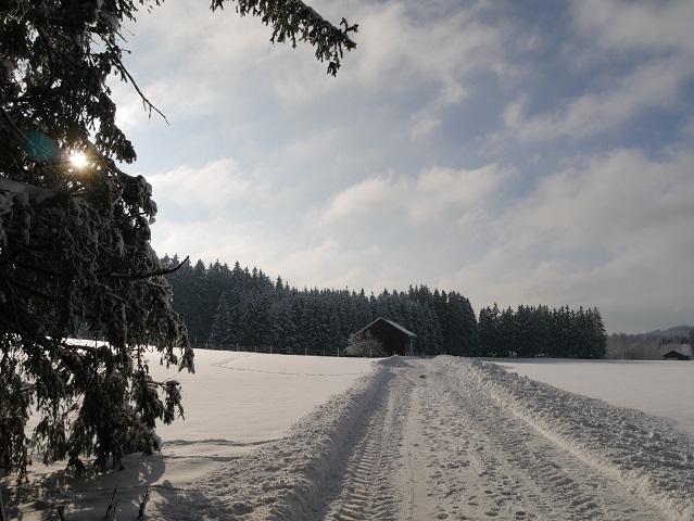 auf dem Elbseerundweg im Winter