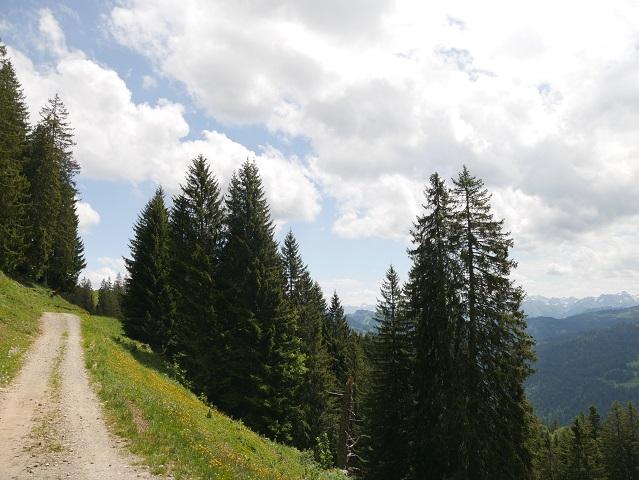 Mit Panorama oberhalb von Balderschwang wandern