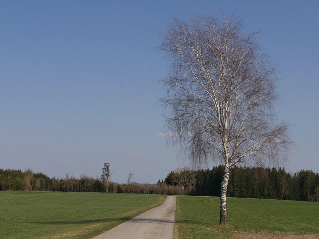 Radweg von Ingenried nach Schlingen