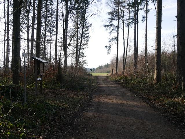 im Königsberger Forst bei Friesenried