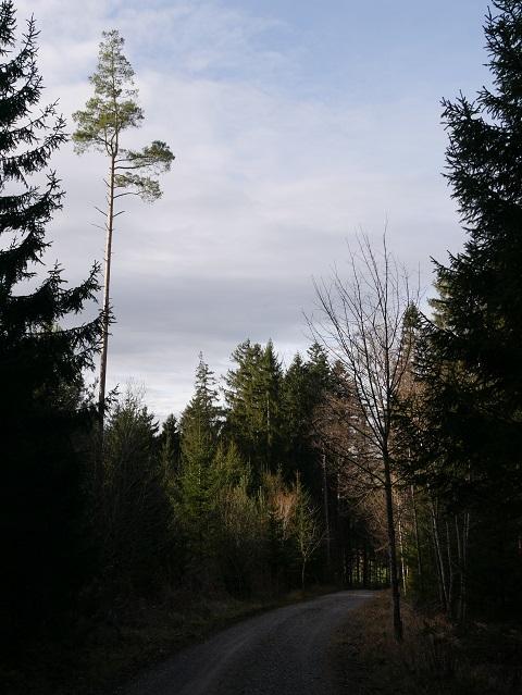 Waldweg auf dem Mangberg in Richtung Wenglingen