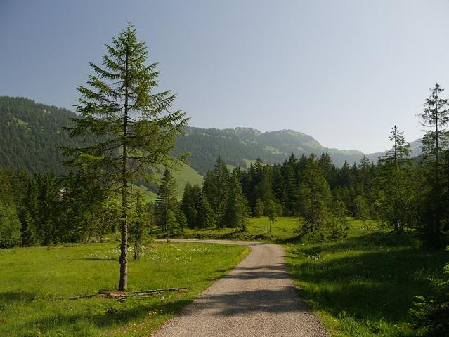 Wanderweg bei Balderschwang