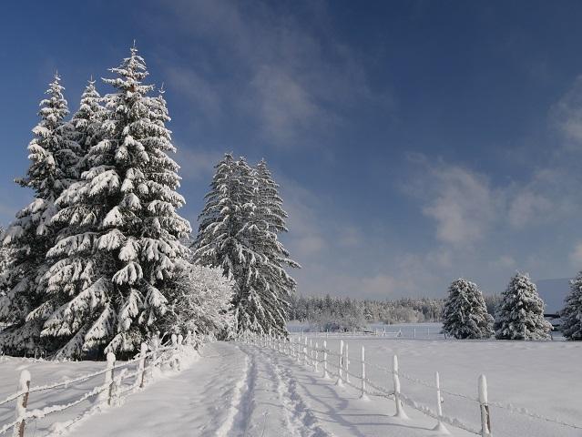 an der Seealpe am Elbsee im Winter
