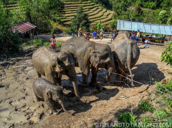 Mud Spa at Elephant Jungle Sanctuary