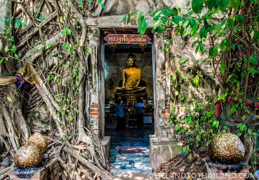 The Thai temple, Wat Bang Kung, overgrown with Banyan trees in Samut Songkhram