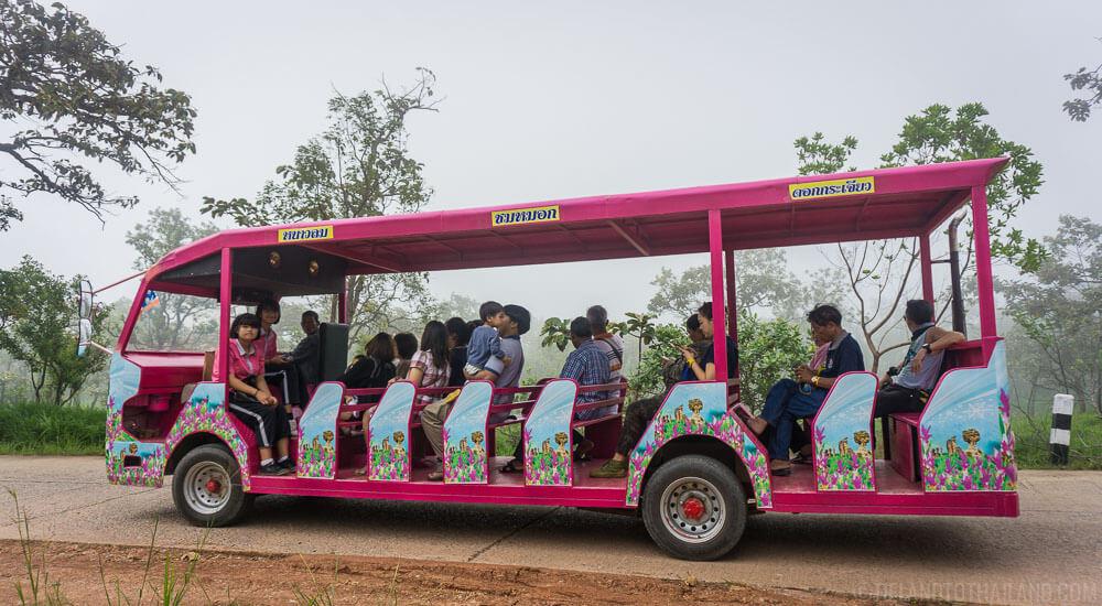 Trolley around the Siam Tulip Festival