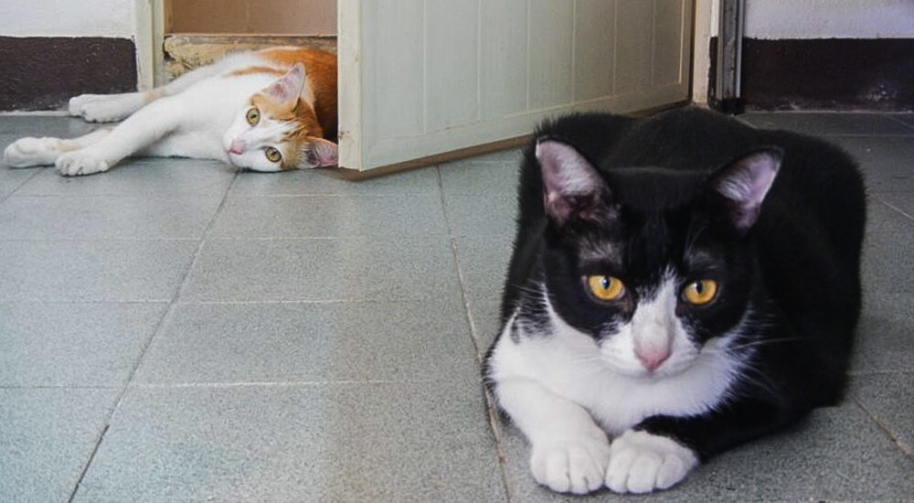 Two rescued cats in Chiang Mai