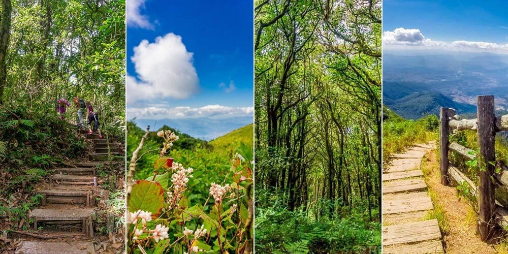 One of our favorite Chiang Mai day trips is visiting the Giew Mae Pan Nature Trail on Doi Inthanon
