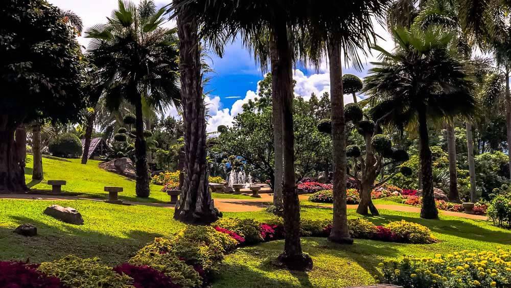 Trees at Doi Tung Mae Fah Luang Garden in Chiang Rai, Thailand