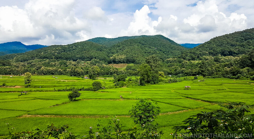 Countryside rice fields in Nan, Thailand