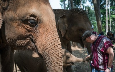 A Day at an Elephant Sanctuary in Chiang Mai