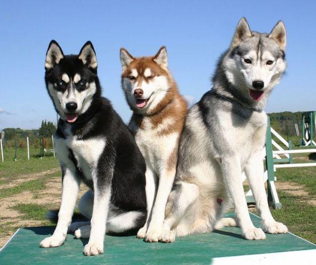 Los celos también angustian a los perros