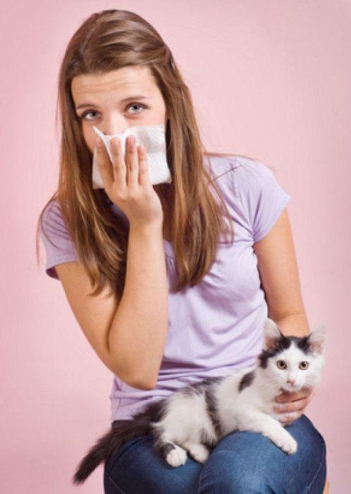 allergic to cat