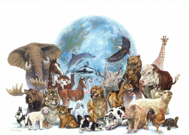 4 de octubre se celebra el Día de los animales