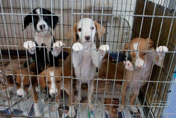 refugio-perros