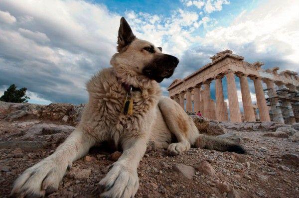 Países que son ejemplo en cuidado de mascotas