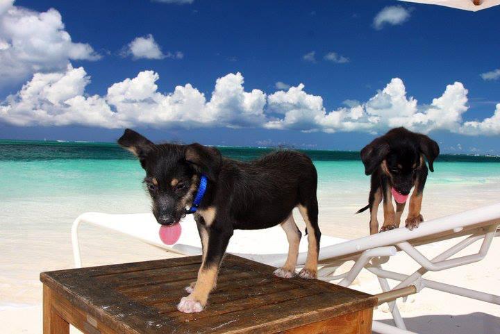 ¡Llegaron las vacaciones! Potcake Place te ofrece la oportunidad de disfrutar de la isla donde los cachorros son los anfitriones