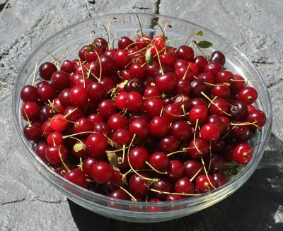 Bowl of sour cherries