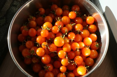 Sungold cherry tomatoes - my favorite kind!
