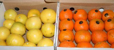 bergamot and Seville orange