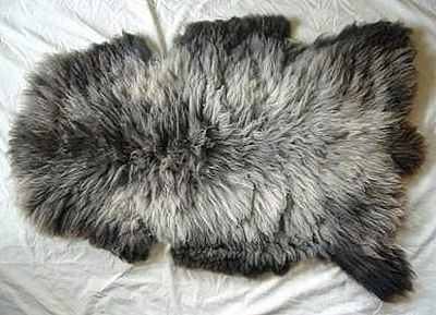 my soon-to-be new sheepskin!