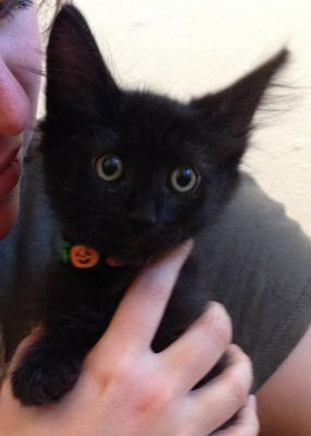 our newly-adopted black kitten!