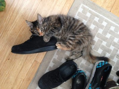 Puss in Boots?