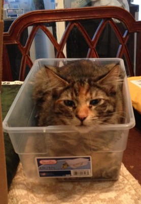 Tigress in a box!