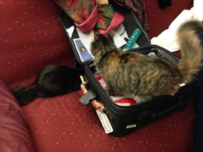 kittens helping with luggage