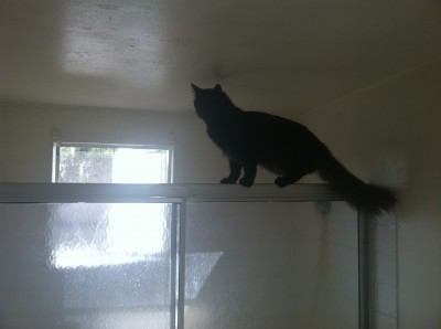 Fritz the incredible flying cat