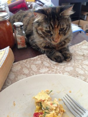 Tigress contemplating my breakfast