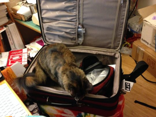 Tigress investigating my suitcase