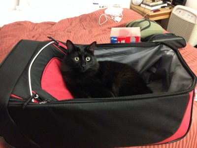 Fritz helping pack