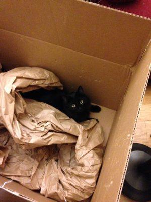 Fritz exploring a box