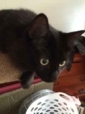 Fritz looking intent